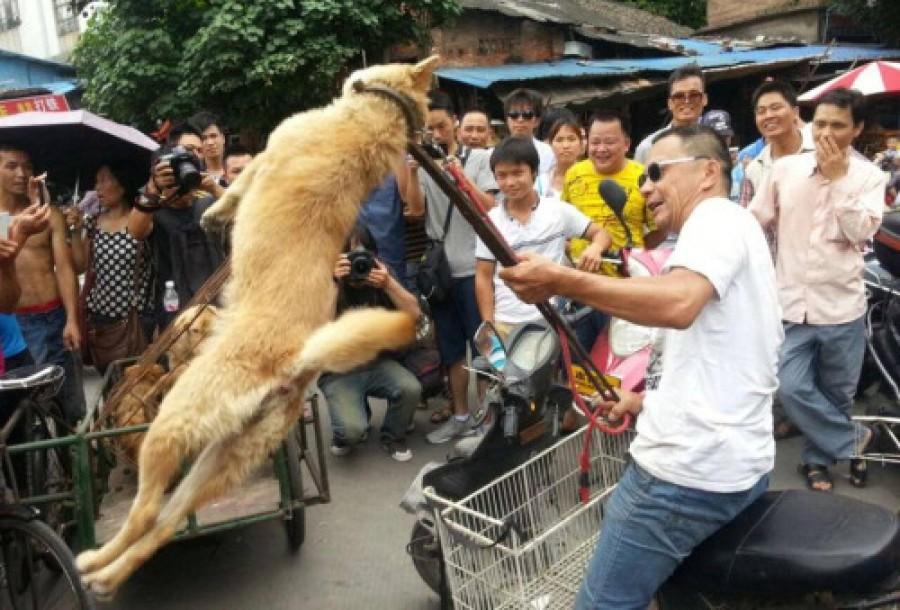 China: festival de carne de cachorro e gato é realizado em meio à pandemia